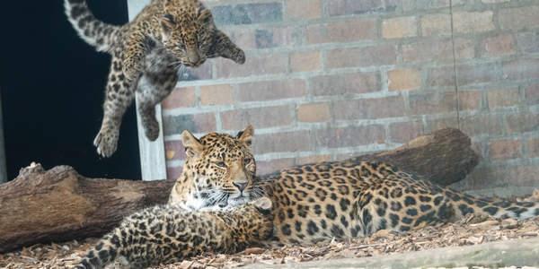 Ab in den Tierpark...
