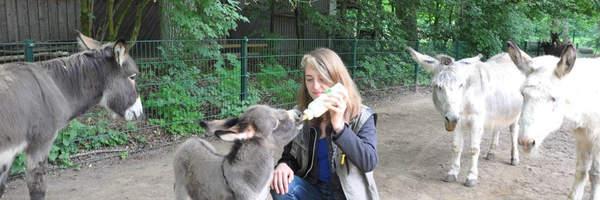 Flaschenkind bei den Eseln
