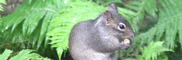 Neue Felsenhörnchen im Raubtierhaus
