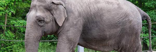 Elefantin Karla lebt nicht mehr